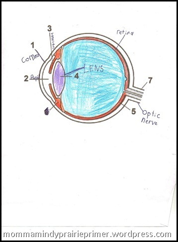 eye-worksheet_thumb7